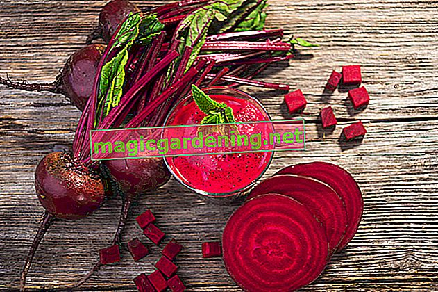 Healthy and tasty - this is how you process red currants
