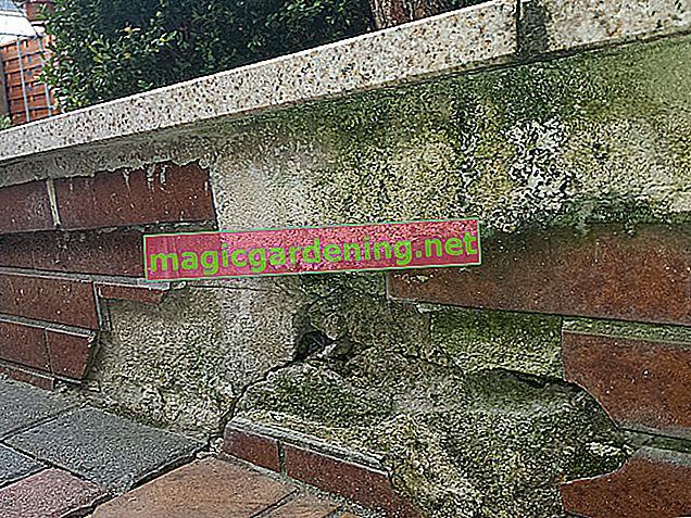 Enduire correctement le mur du jardin en contreplaqué