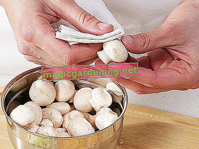 Coupez et nettoyez correctement les champignons