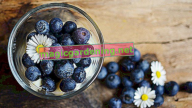 Wash blueberries properly before eating