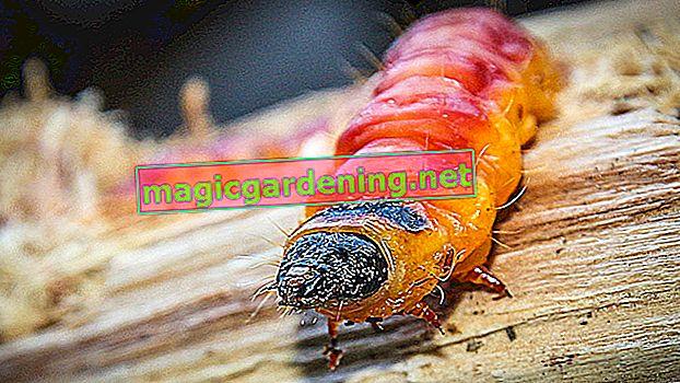 Scopri e combatti per tempo le malattie del rododendro