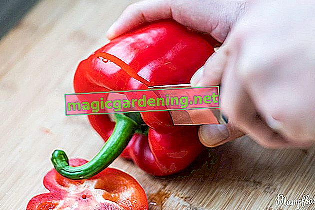 Exemplarily cutting peppers - a tutorial