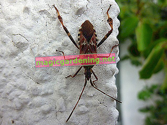 Identifica e controlla gli insetti in casa