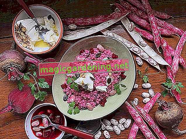 Harvest time for beans