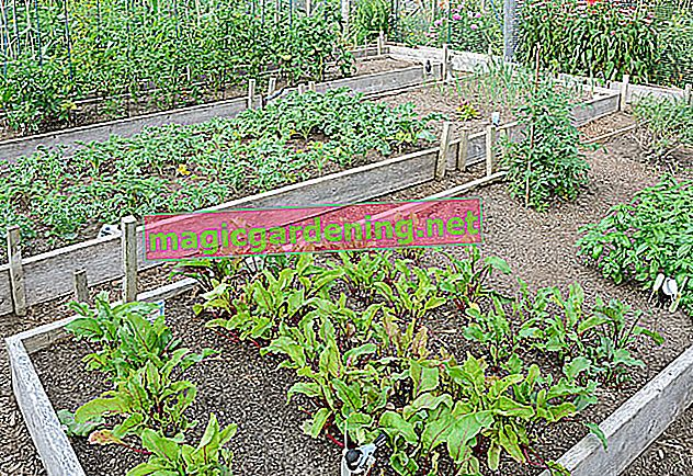 Optimal planning in the vegetable garden with a cultivation plan