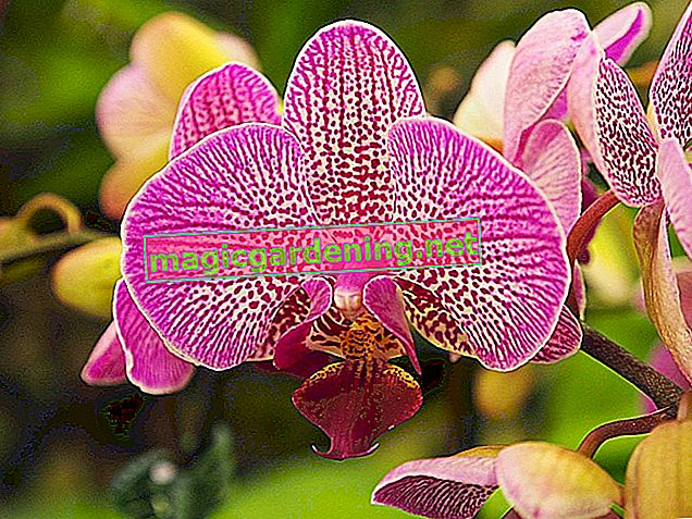 Are orchids harmful or not in the bedroom?