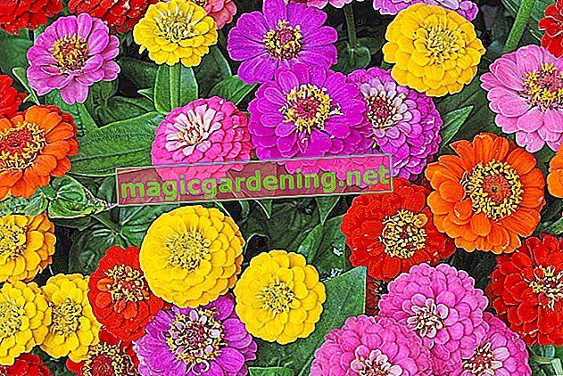 Planting zinnias - that's what matters