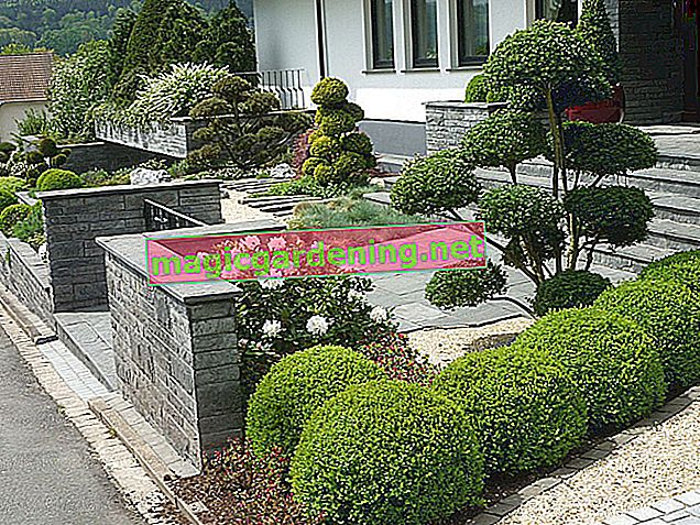 Designing a front garden with gabions - creative ideas