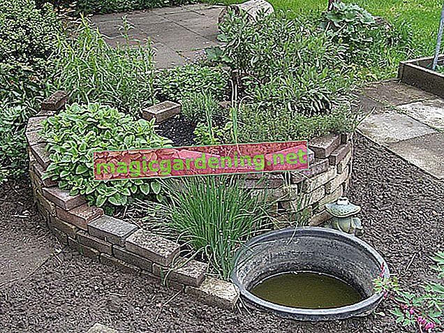 Planting the zinc tub: a guide