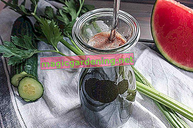 Jus frais du jardin: extraire le jus des mûres