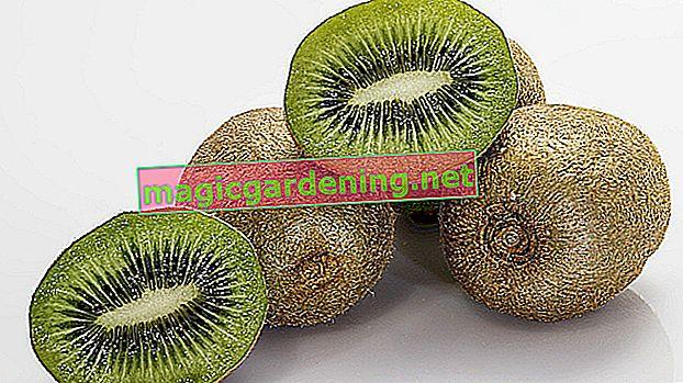 Jak prawidłowo pokroić owoce kiwi - instrukcje w samouczku