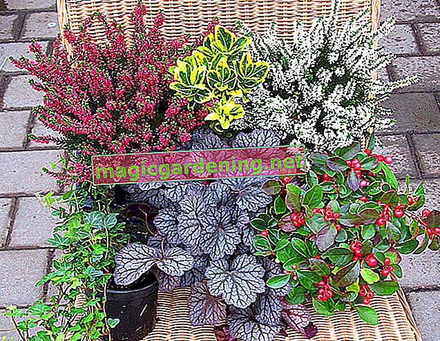 Which plants are suitable for a balcony box in partial shade?