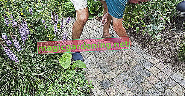 How can I prevent weeds from growing to the neighbors?