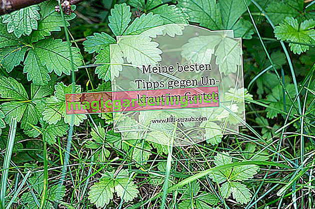 Klorix against weeds: does it work?