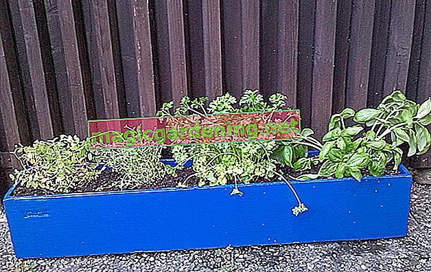 Ispravno saditi cvjetne kutije za balkon - tako to djeluje