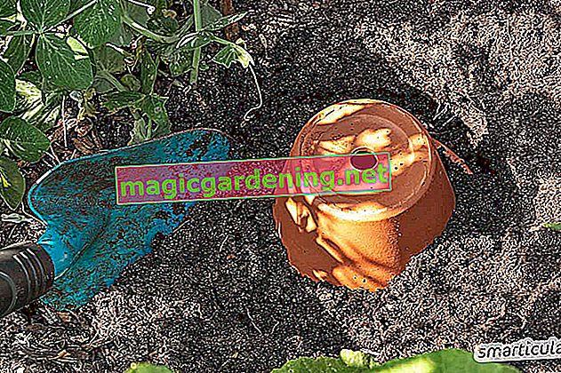 Effettua tu stesso l'irrigazione automatica delle piante da interno