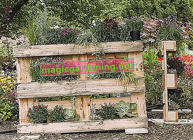 Planting pallets: a guide