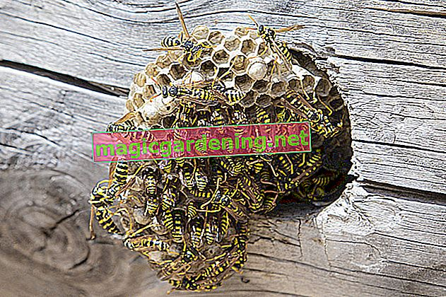 Removing a bee nest - what you need to know