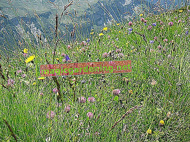 Crea un magico prato estivo - per un colorato mare di fiori