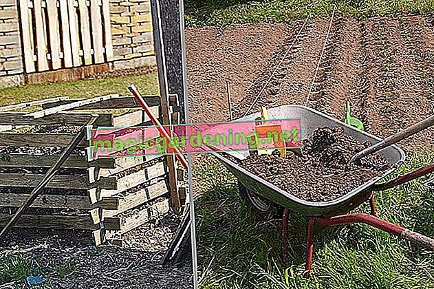 Come concimare il prato con il compost