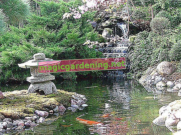 Tips for a Japanese Garden - How to Create a Japanese Garden
