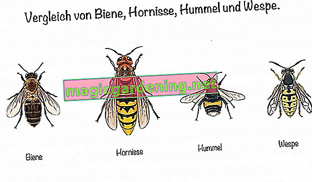 Comparison of bee, hornet, bumblebee and wasp