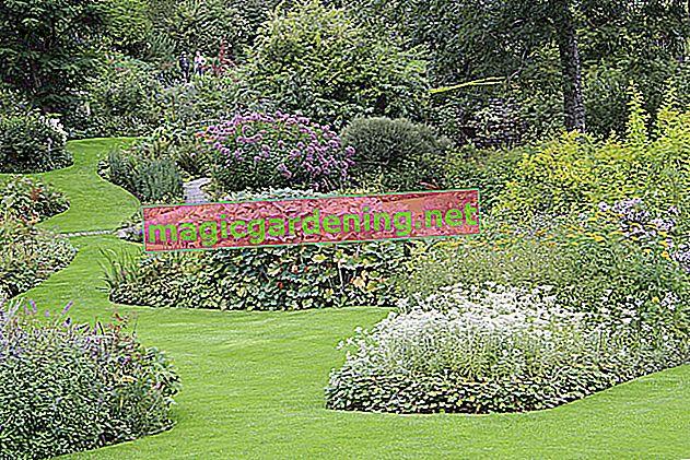 Bahçedeki ortanca için mükemmel yer