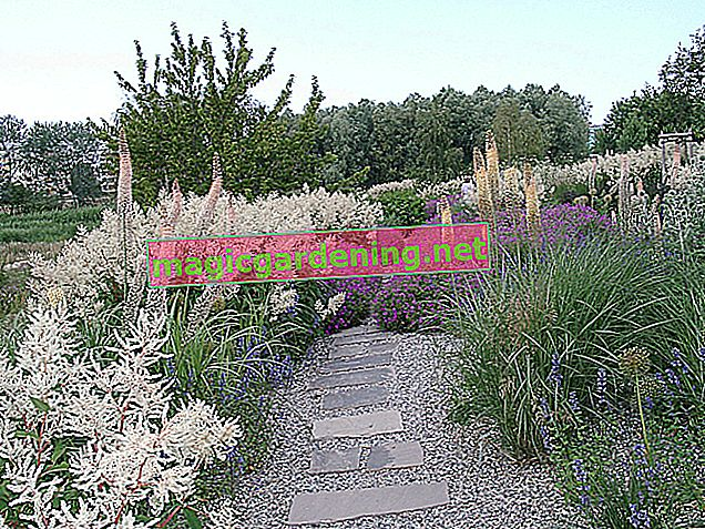 How to make a long and narrow flowerbed appealing