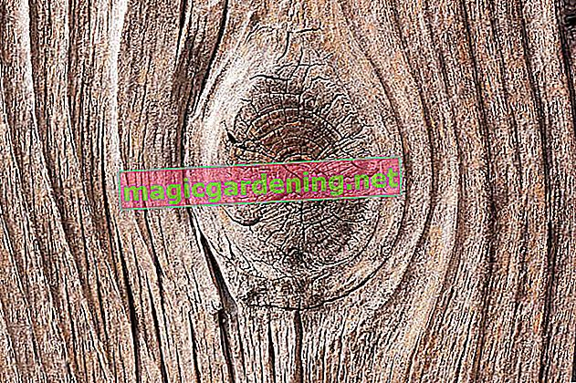 Milling tree roots - tips for milling
