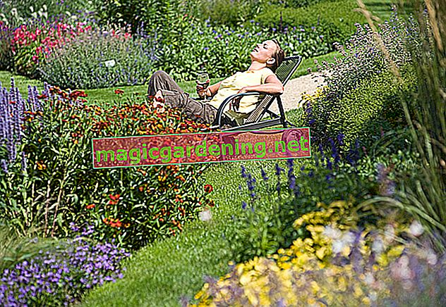 Pianta il cavolo nel tuo giardino