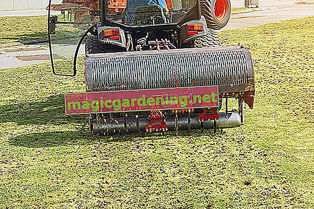 Comment aérer la pelouse de manière exemplaire - conseils pour l'aération