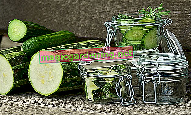 Freezing zucchini: raw or cooked?