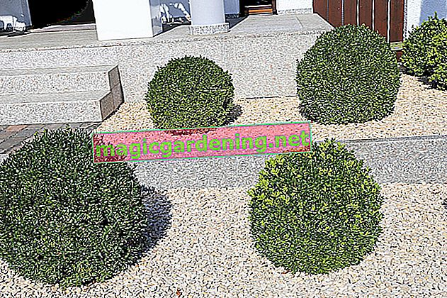 Design the front yard in a modern way - ideas for modern front yard design