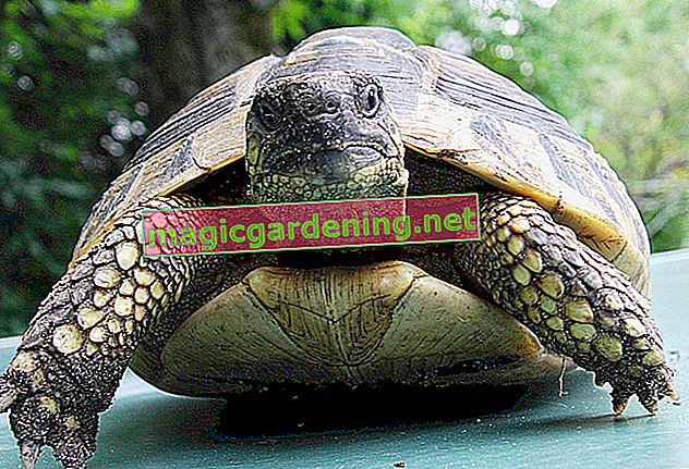 Keeping a turtle in the garden - how does it work?