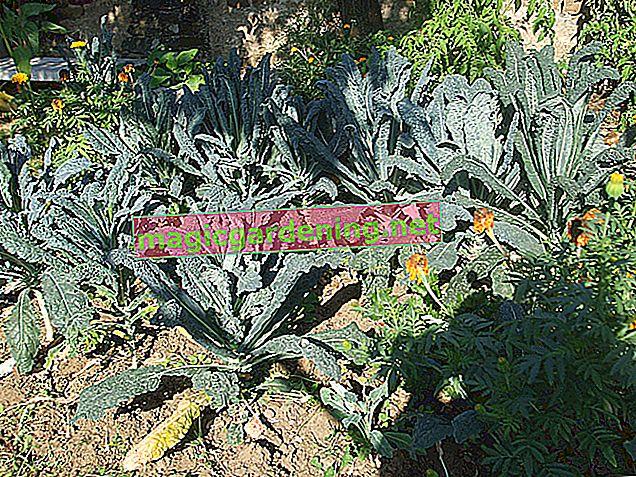 Varietà di frutti di bosco: una ricca varietà di bacche per il giardino