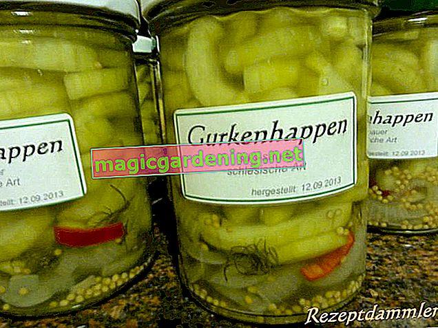 Preserving Silesian cucumbers
