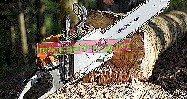 Süs biberlerinin bir houseplant olarak bakımı için ipuçları