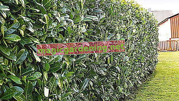 Koje su biljke prikladne za zaštitu privatnosti u vrtu?