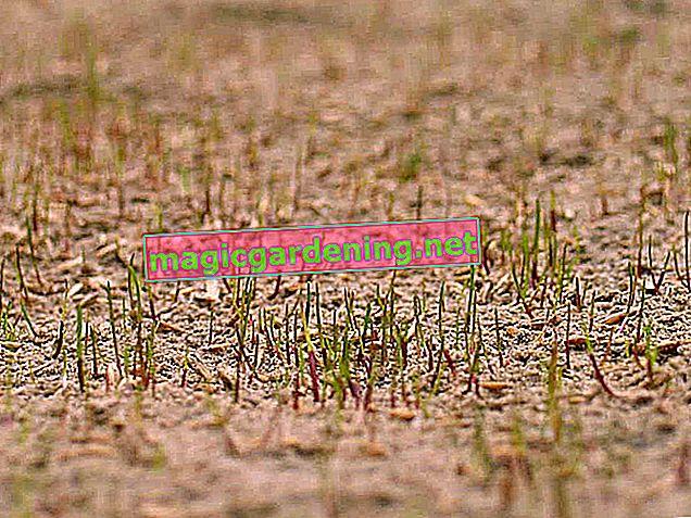 Pravilno brusite travnjak - tako pijesak travnjak čini zelenim