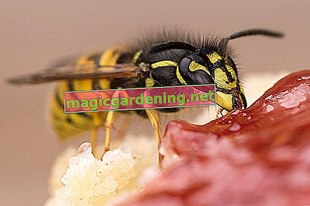 How to mess with wasps in the roller shutter box