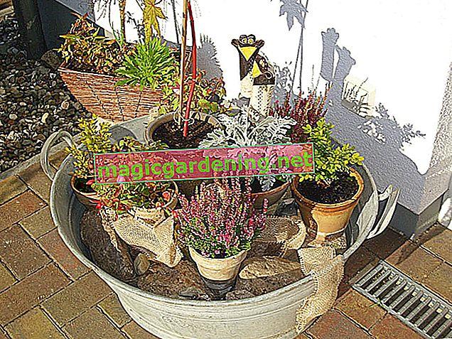 Deliksiz bitki çinko küveti