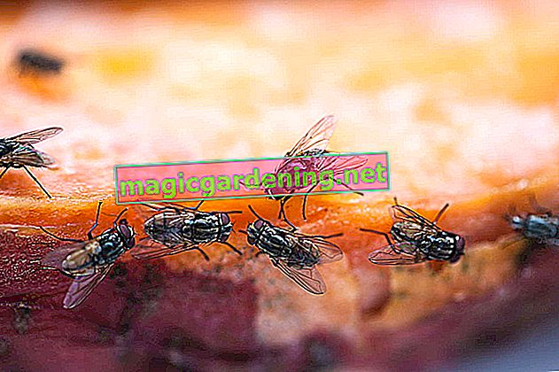 When flies frolic in the potting soil - tips