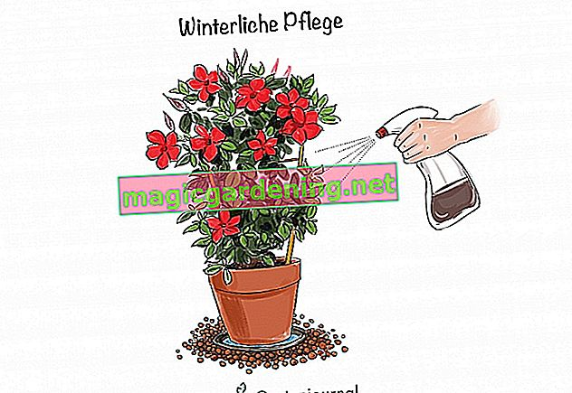 Winter care