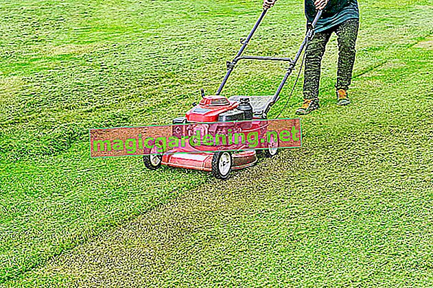 When is the lawn mowed? - Tips at the perfect time