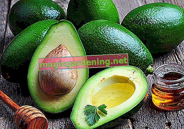 Avocado - Does the tropical fruit count as a fruit or vegetable?
