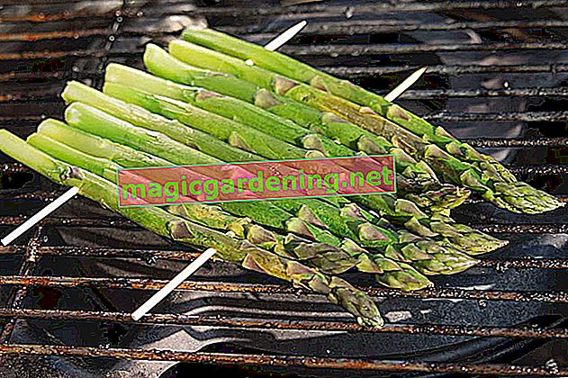 Freeze green asparagus for asparagus enjoyment at any time of the year