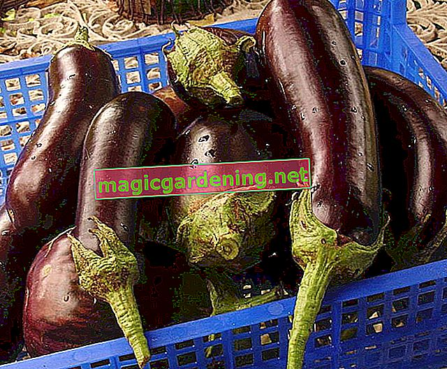 Freeze eggplants in advance