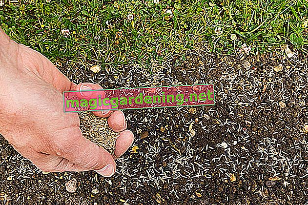 When to sow the lawn - All information on timing and sowing