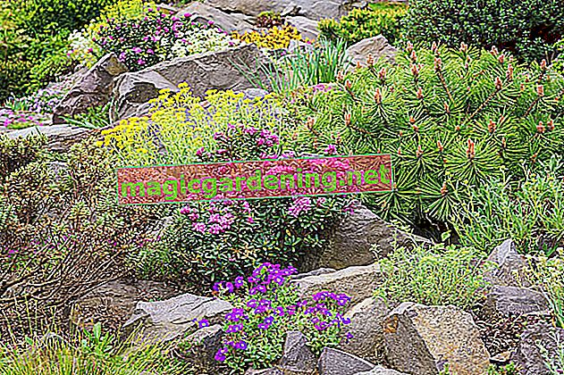 Flower bed design with stones